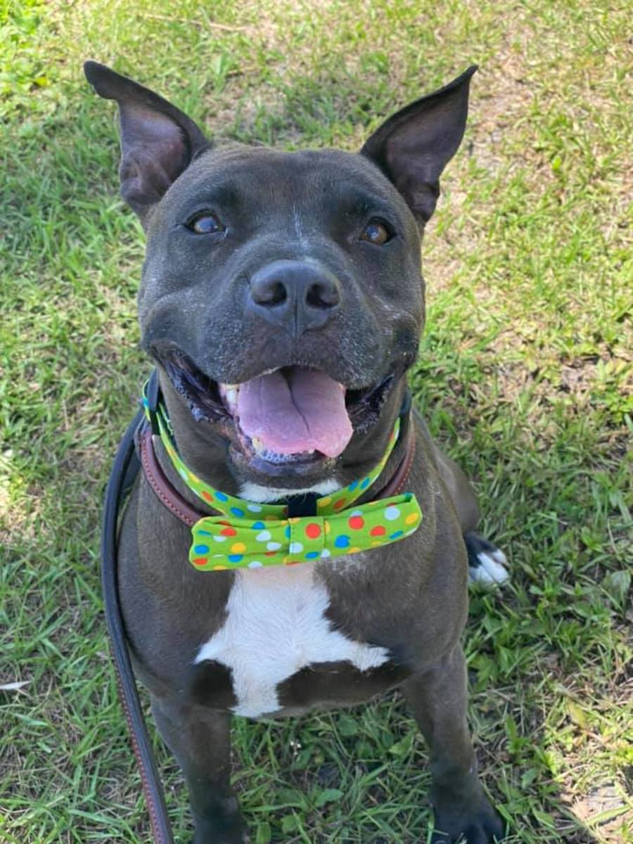Personal story for Penguin was featured by volunteers from the Furry Friends of Manatee County Animal Services.