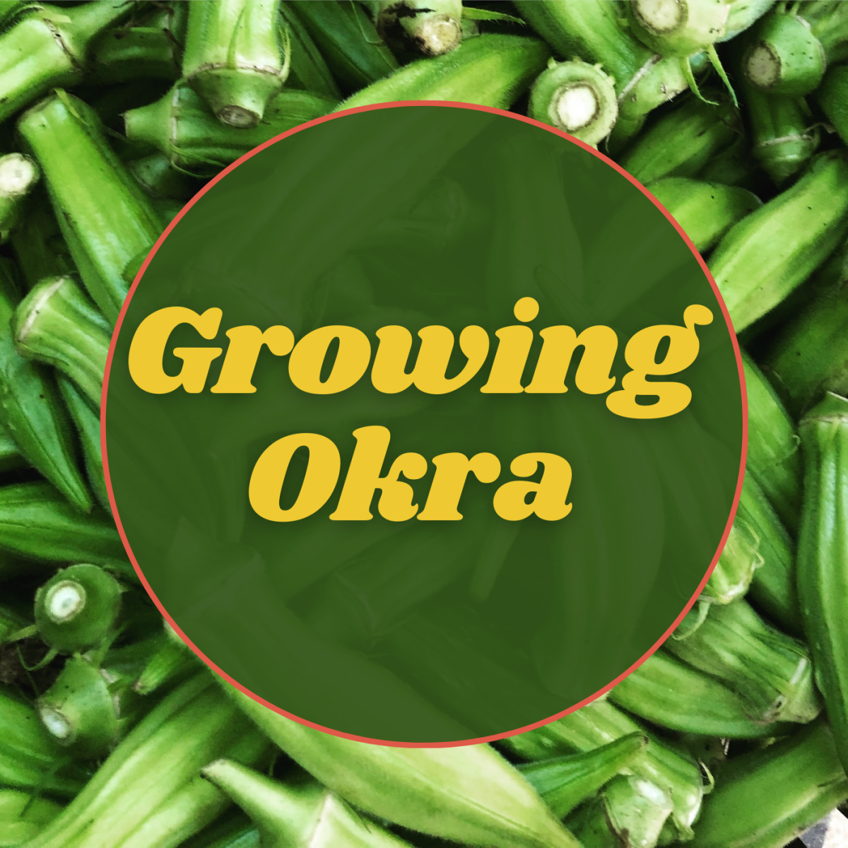 Tips for growing okra.