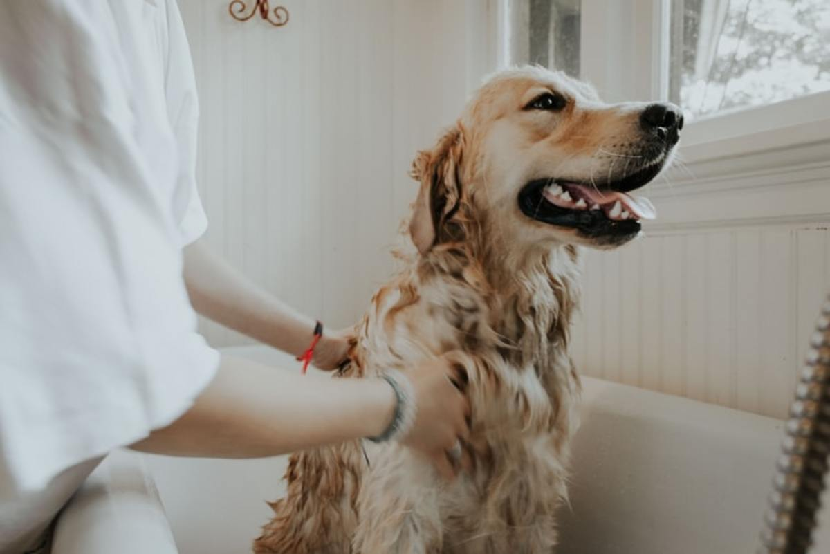 pet-therapy-how-you-and-your-pooch-can-get-involved