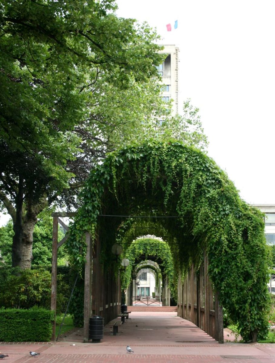 Pergola in the Town Hall gardens