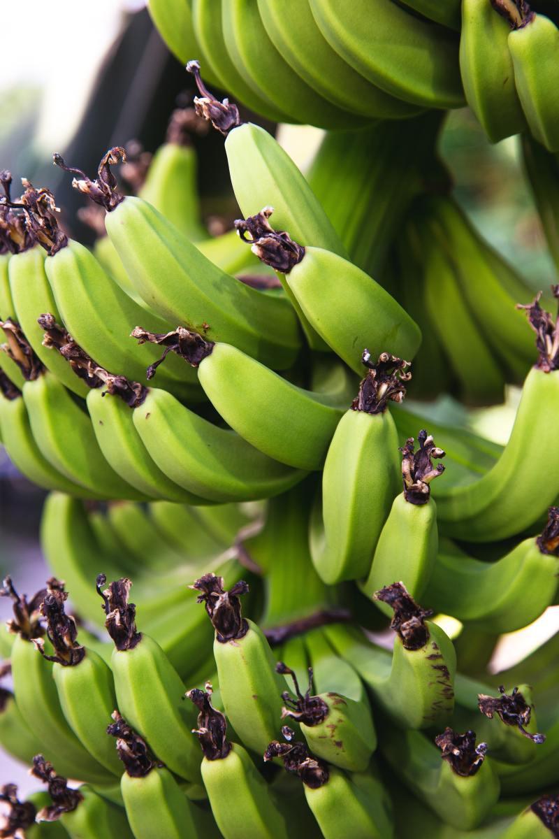 Raw banana stem.