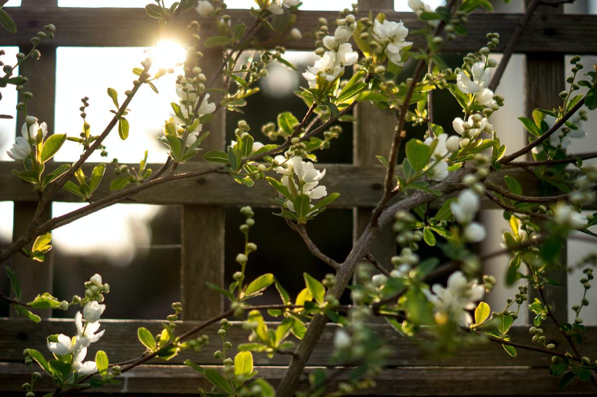 Putting your trellis up against your balcony railing can be a great way to create a calm atmosphere and boost privacy.