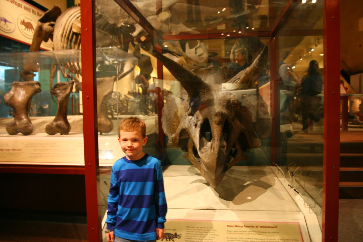 The author's six year old son at the Natural History Museum