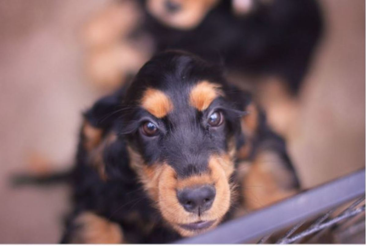 Use a baby gate or pet fence to provide your dog an area to to stay calm and prevent rehearsal of the problematic behavior. The gate will prevent your dog from directly jumping on people.