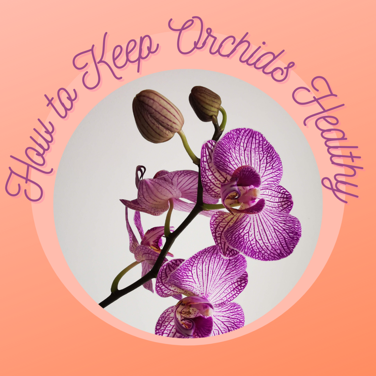 Follow these 7 tips to keep your orchids alive and healthy.