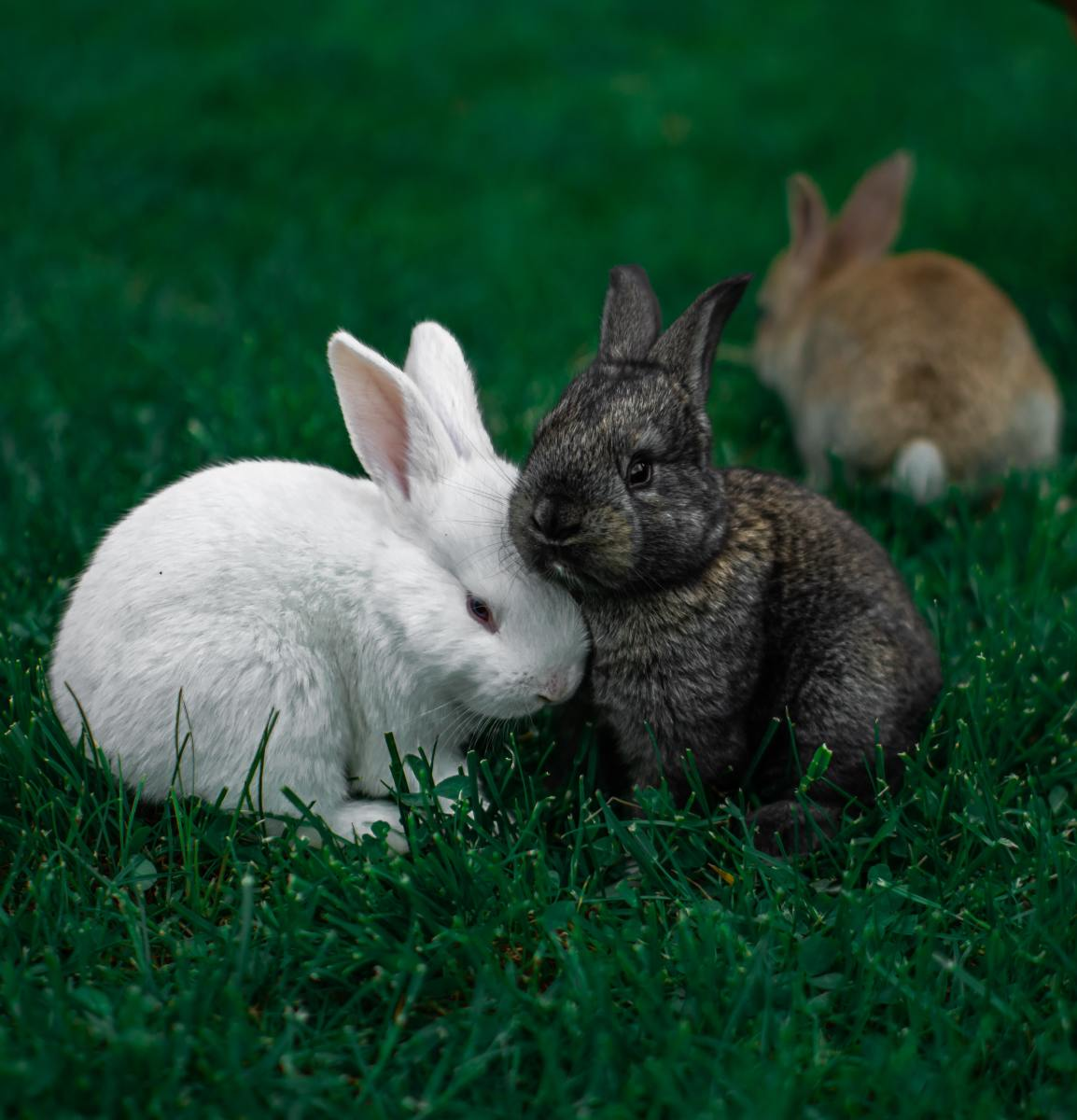 According to some superstition, rabbits can be a sign of much procreation to come.