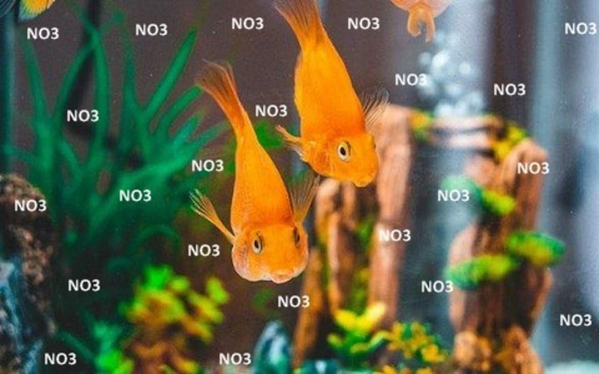 Goldfish Nitrate Poisoning