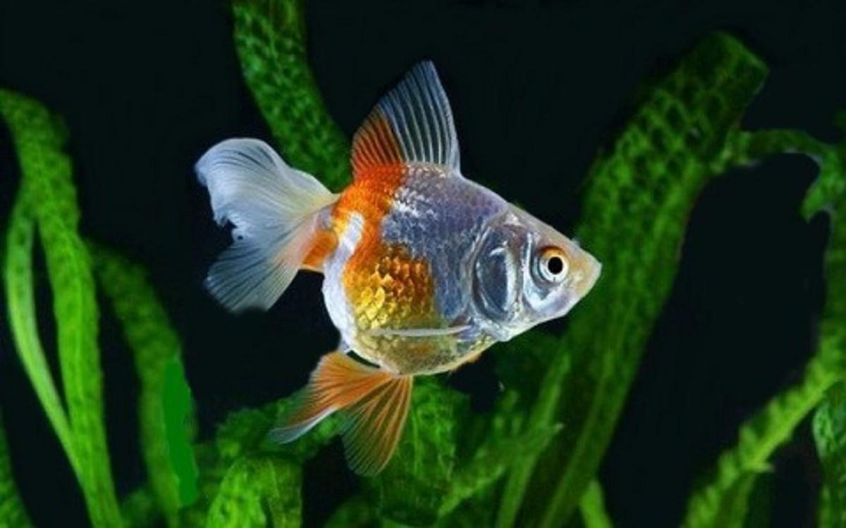 Aquarium Plants and Fish