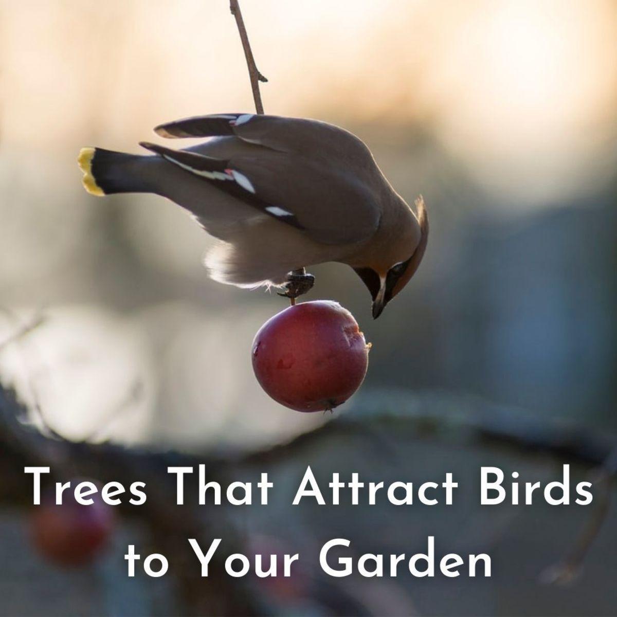 Bird Eating an Apple