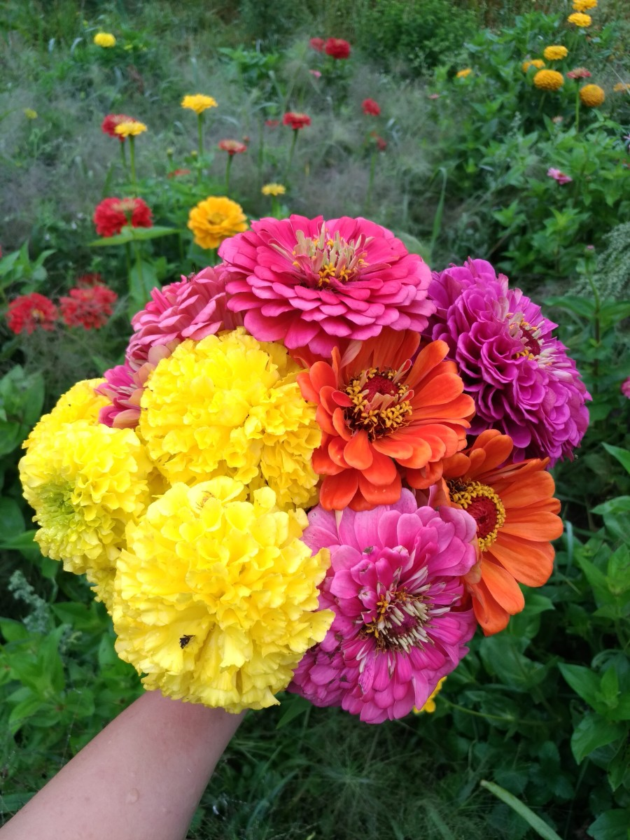 I love growing and selling cut flowers.