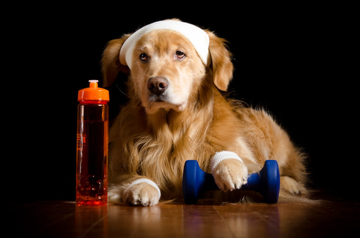 novox-for-dogs