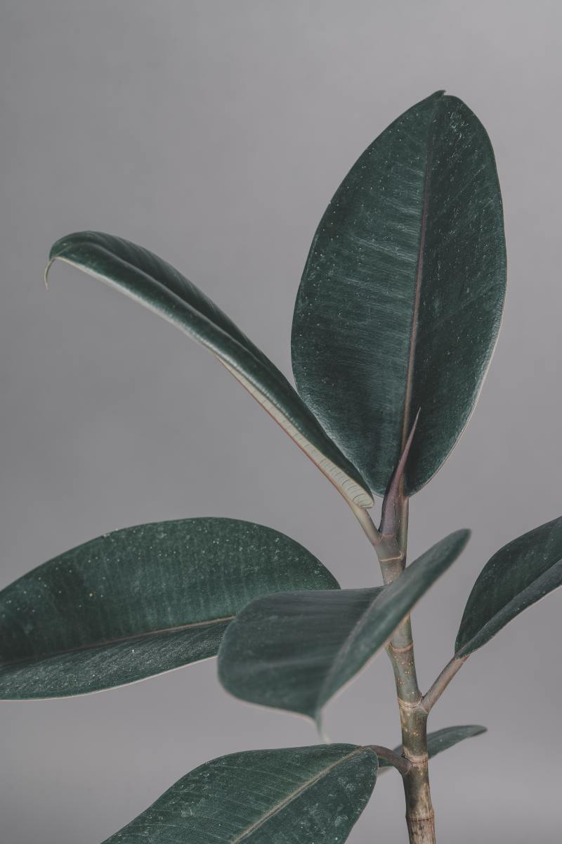 10-best-air-purifying-plants-in-feng-shui