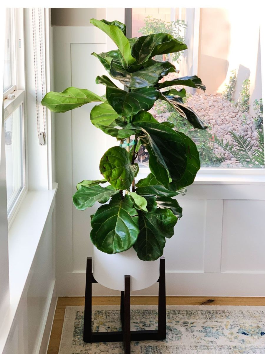 10 Best Air-Purifying Plants in Feng Shui
