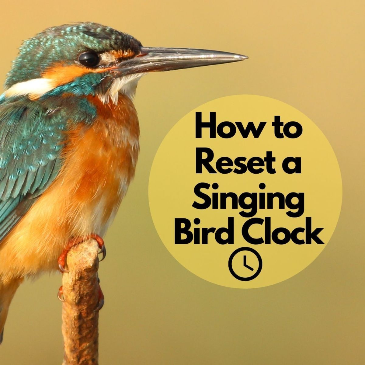Bird clocks are a great addition to any home.