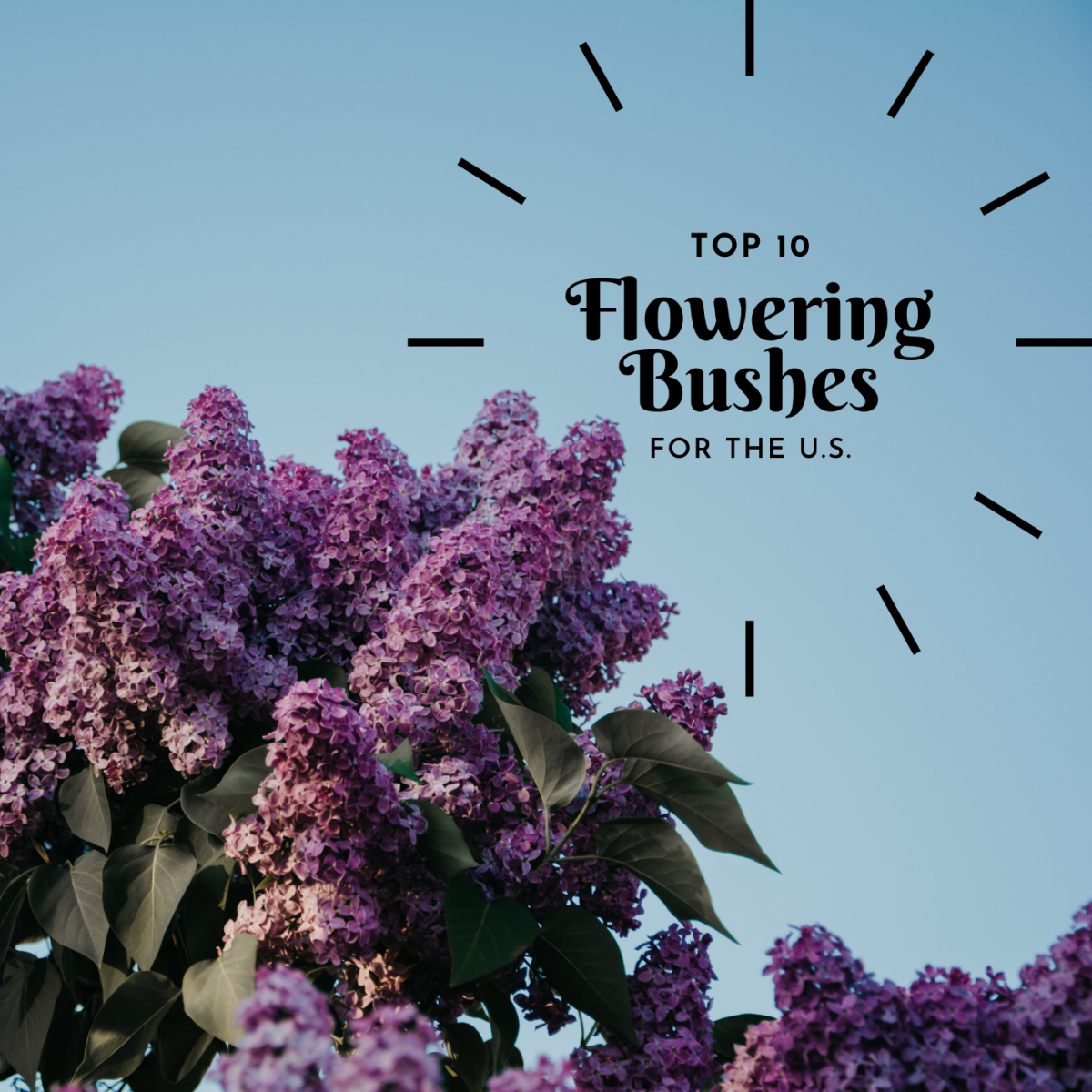 Discover ten flowering shrubs and bushes for eastern and western parts of the U.S.