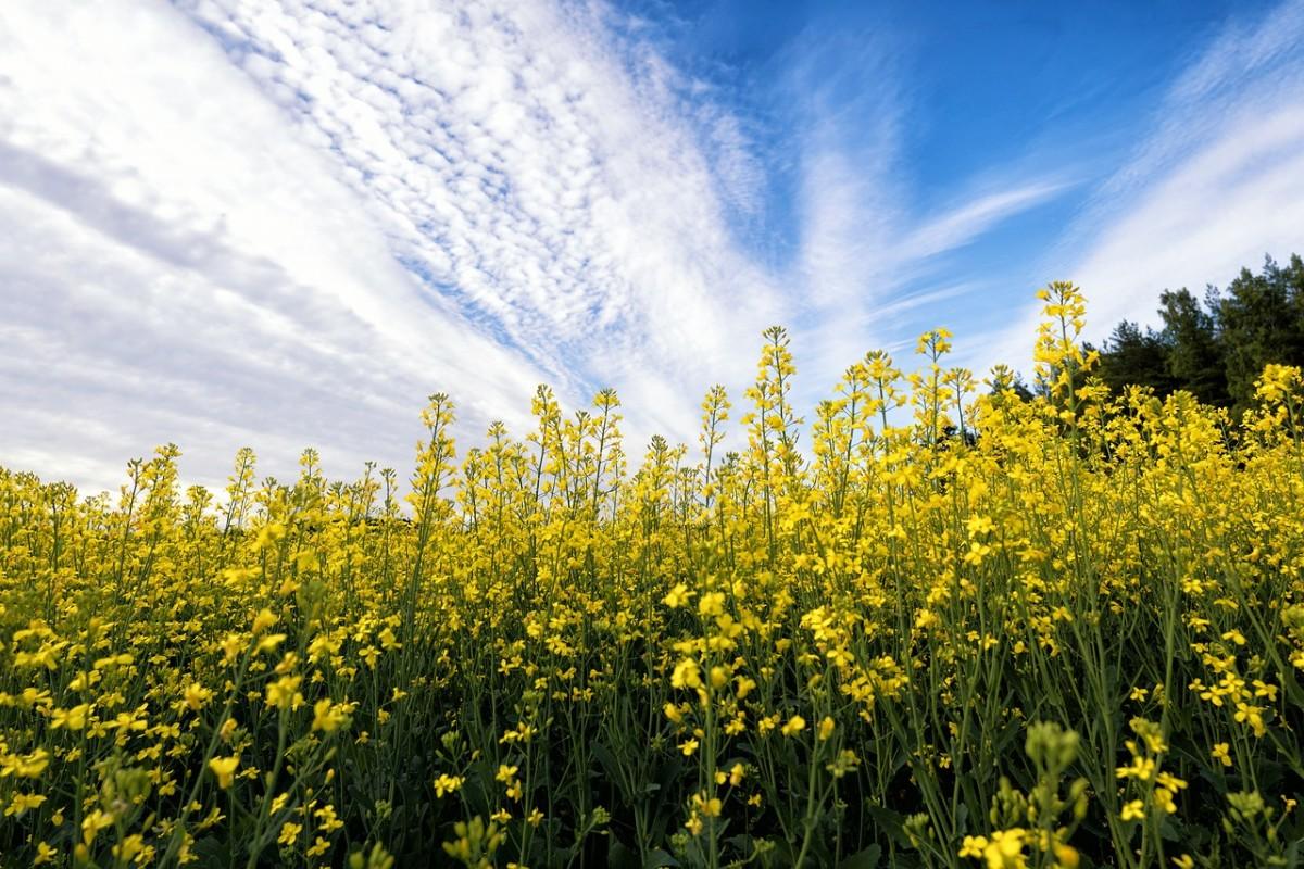 powerful-little-mustard-seed