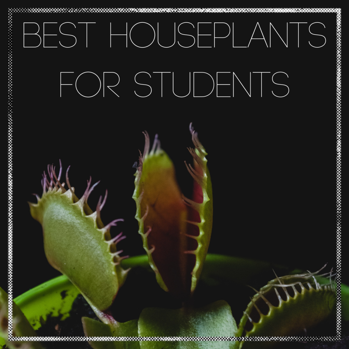 Easy to care for houseplants perfect for college students.