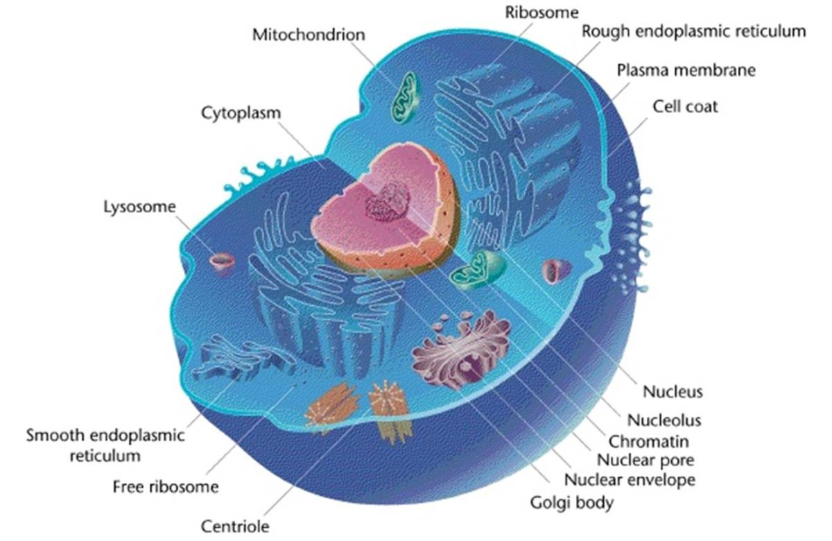 IB Biology SL Core Curriculum Revision Notes