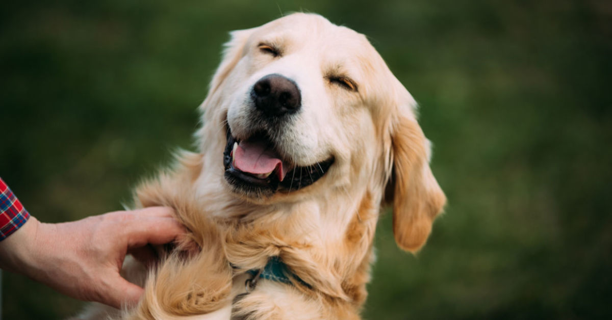 why-you-should-have-a-dog