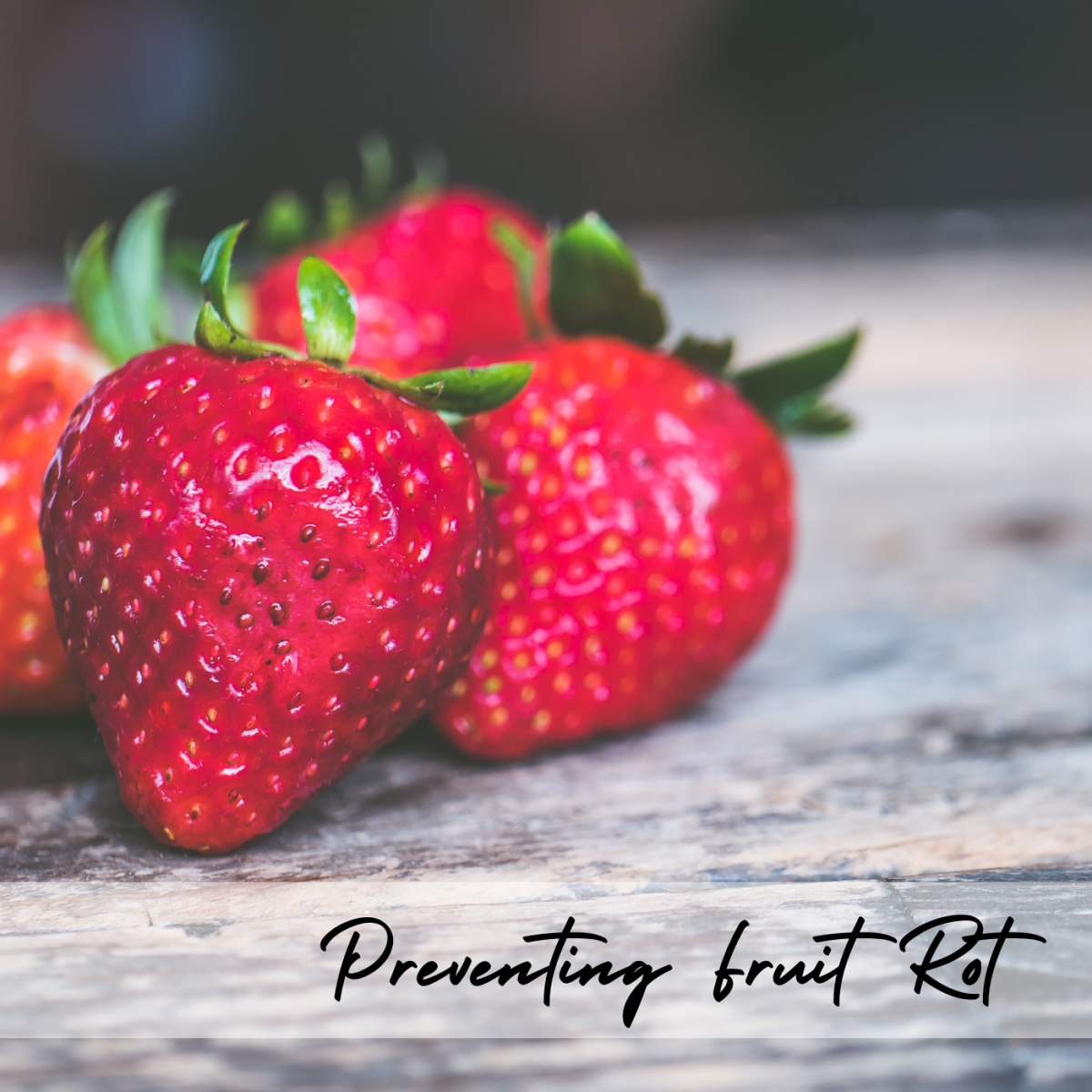 Mushy Strawberries? No thanks! Learn how to identify and prevent different kinds of fruit rot.