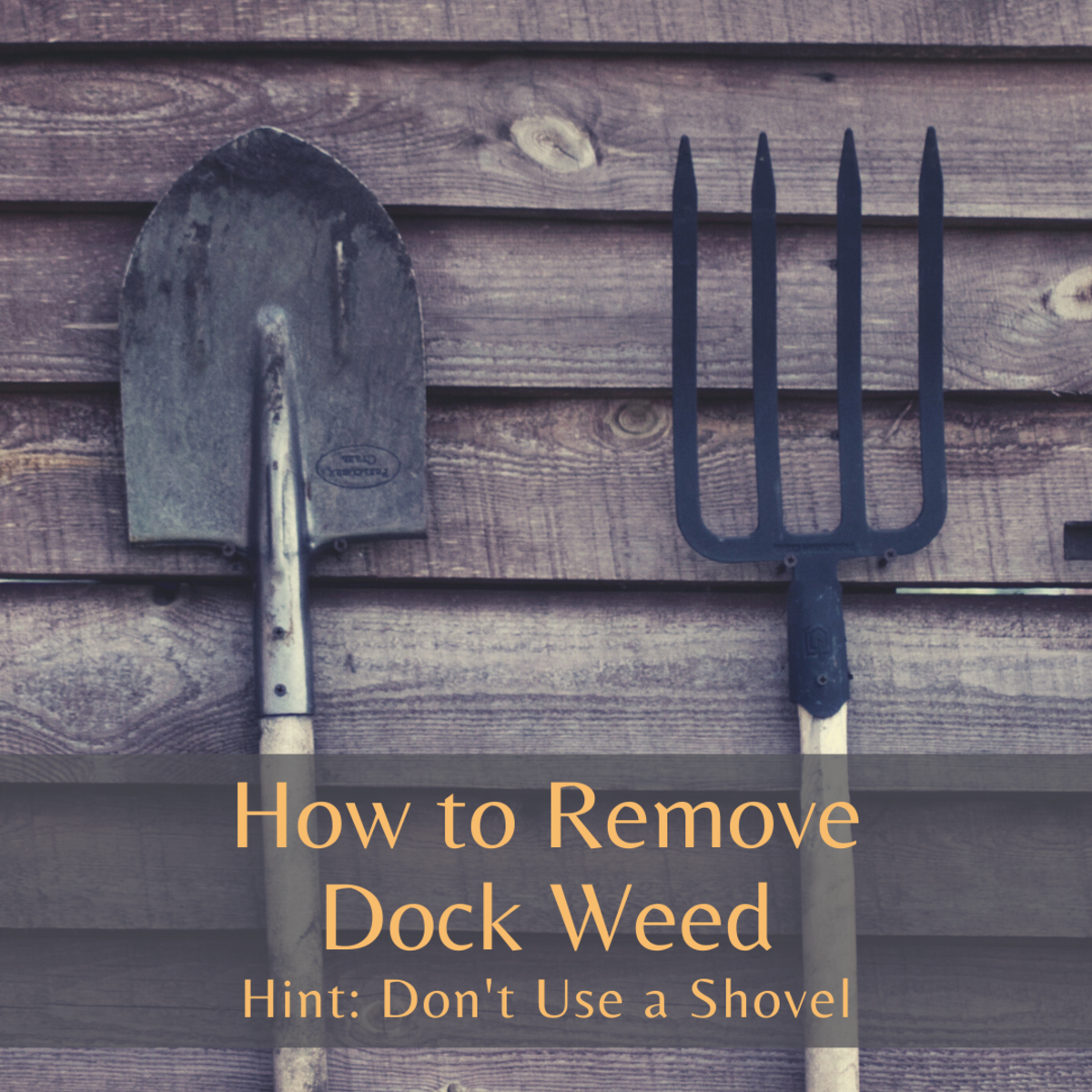 Don't use a shovel or trowel to remove dock weed.
