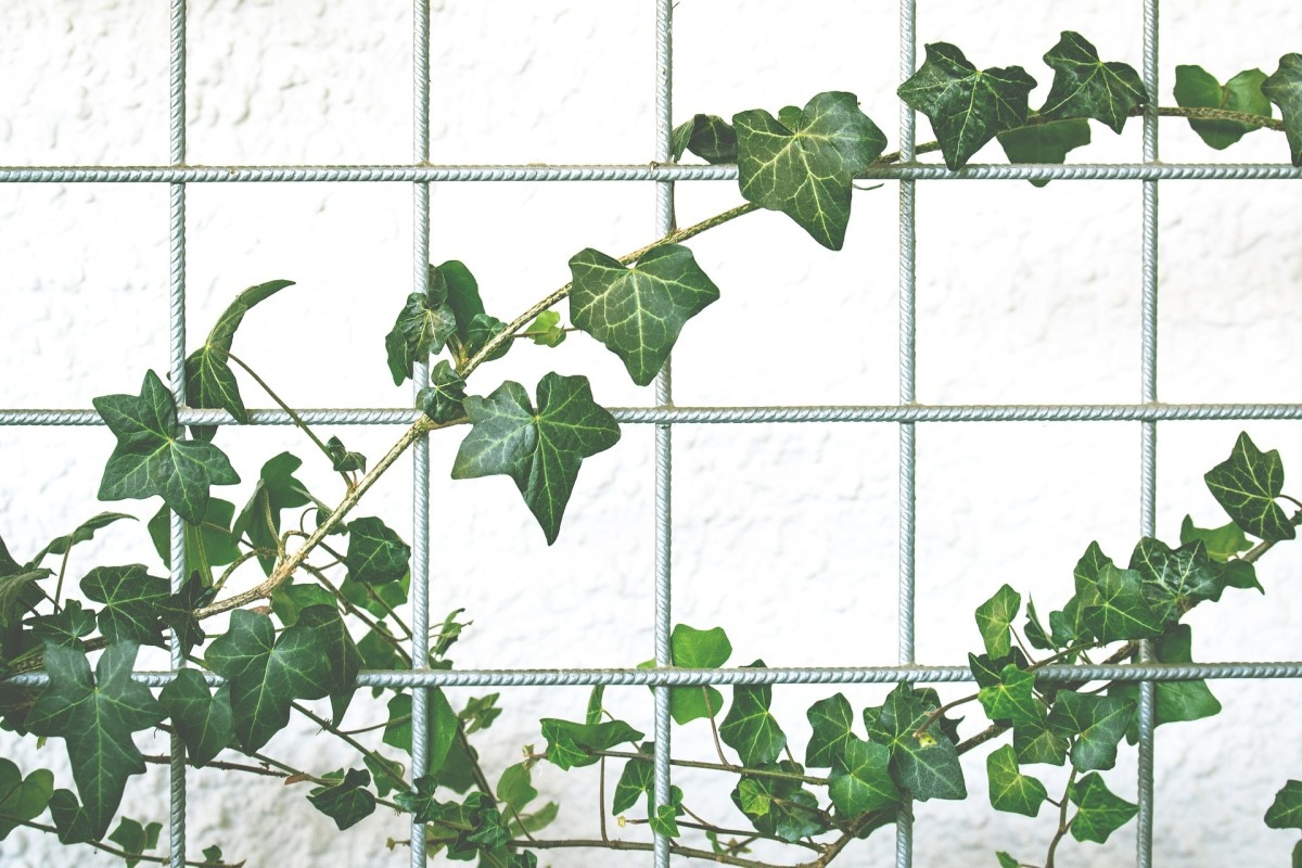 Thin mesh of some type is best for plants with tendrils. However, ivy and other winders can also grow on a mesh, as long as it's widely spaced.