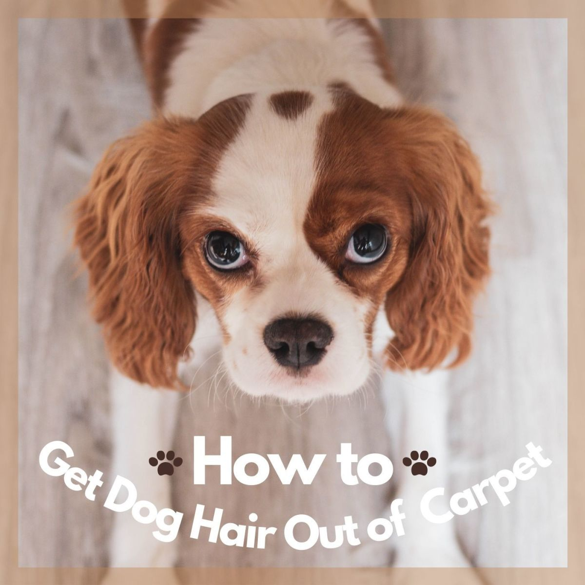 Follow these steps to get rid of your pet hair everywhere!