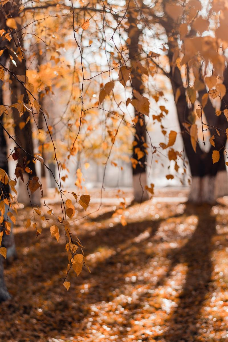 The Leaves Are on Fire - a Poetic Tribute to the Beauty of Autumn