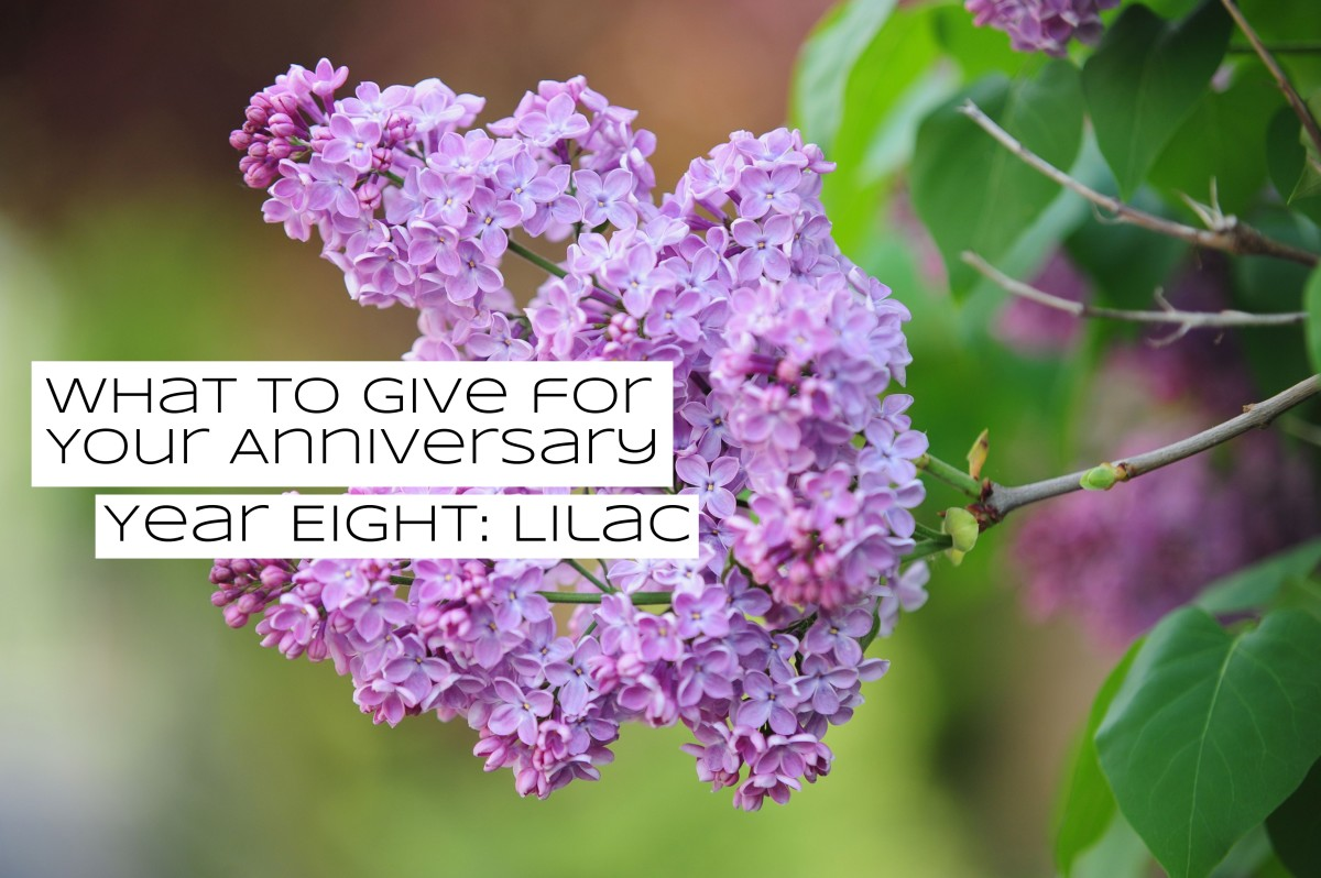 Lilacs are packed with mythology. Lilacs have been used to hide the scent of dead people. Lilacs have been used to cast spells on people to get them to fall in love.