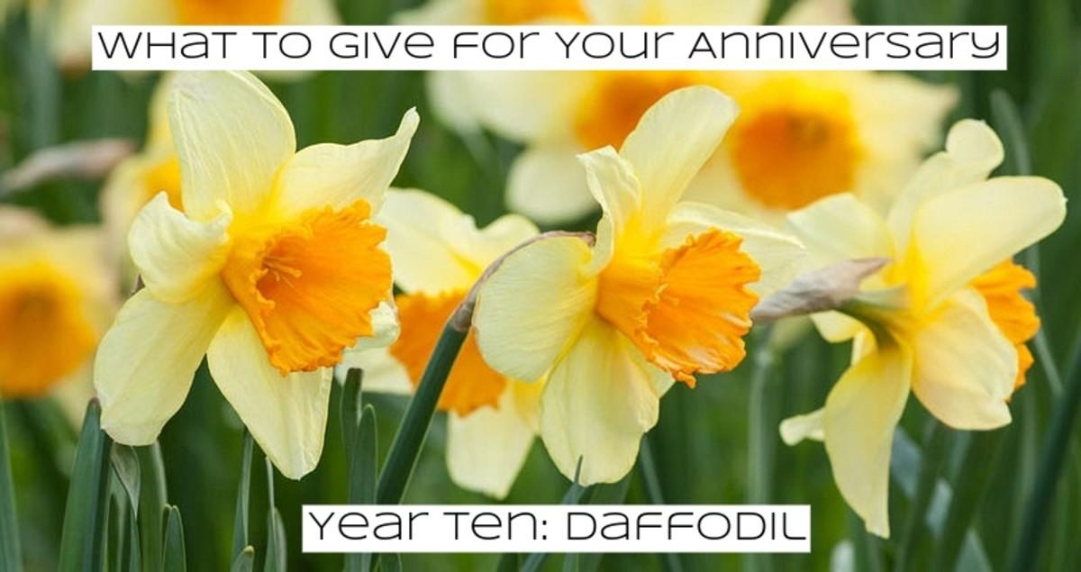 Daffodils trumpet in good feelings.