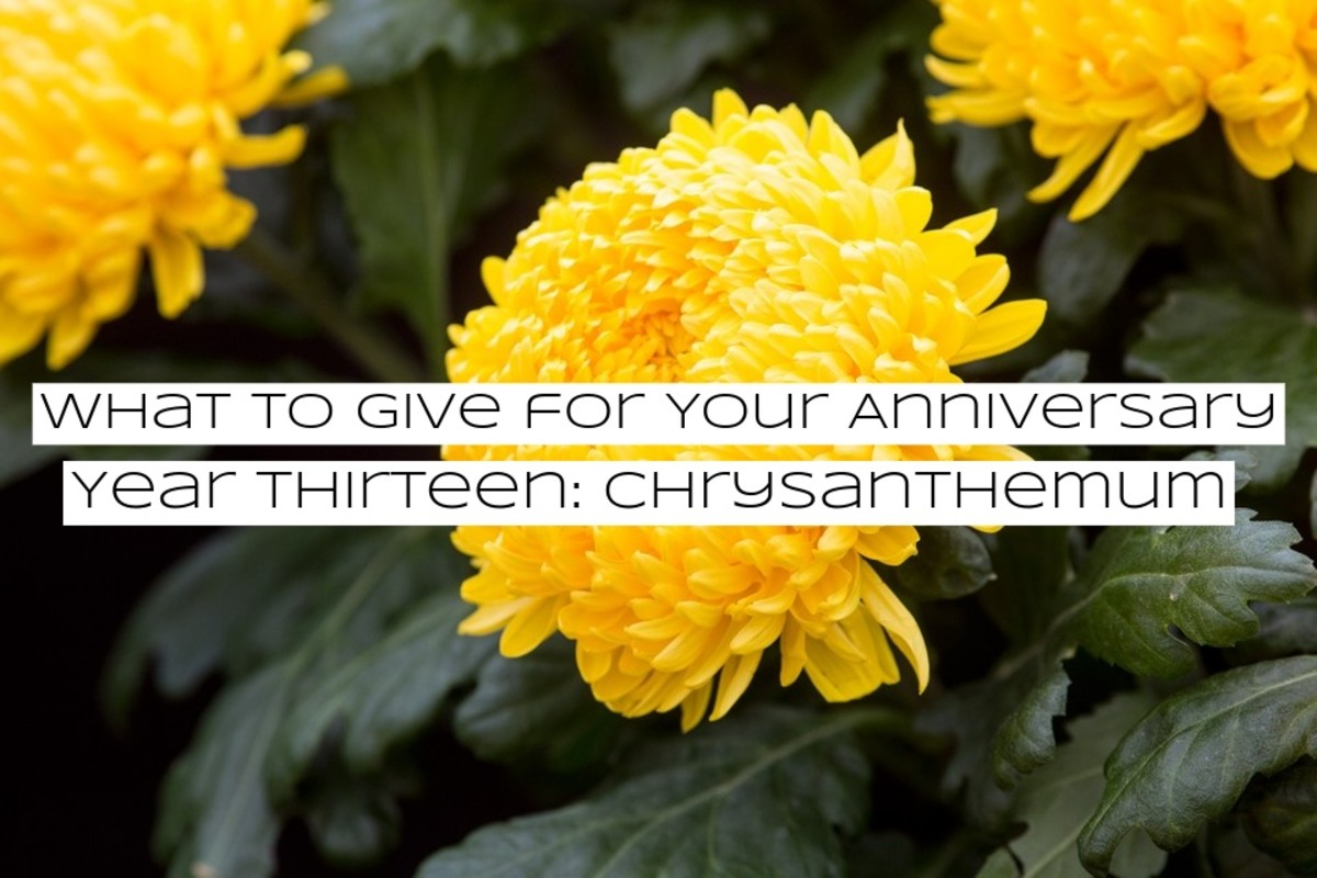 Chrysanthemums. One of the hardest flowers to spell. They're incredibly popular in Asia.