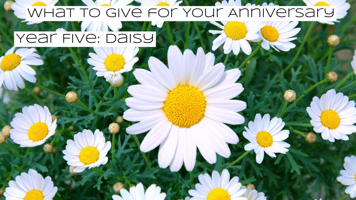 A common flower, but the symbology behind it is precious. The daisy represents heartbreaks: losing children, infertility, and miscarriages. Daisies remind us that life and good times will still find a way.