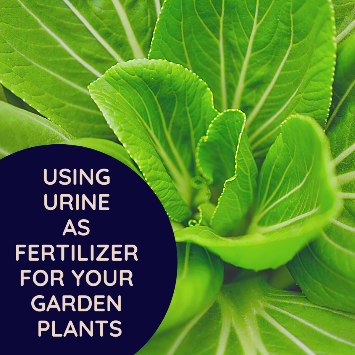 Can You Use Urine to Fertilize Plants?