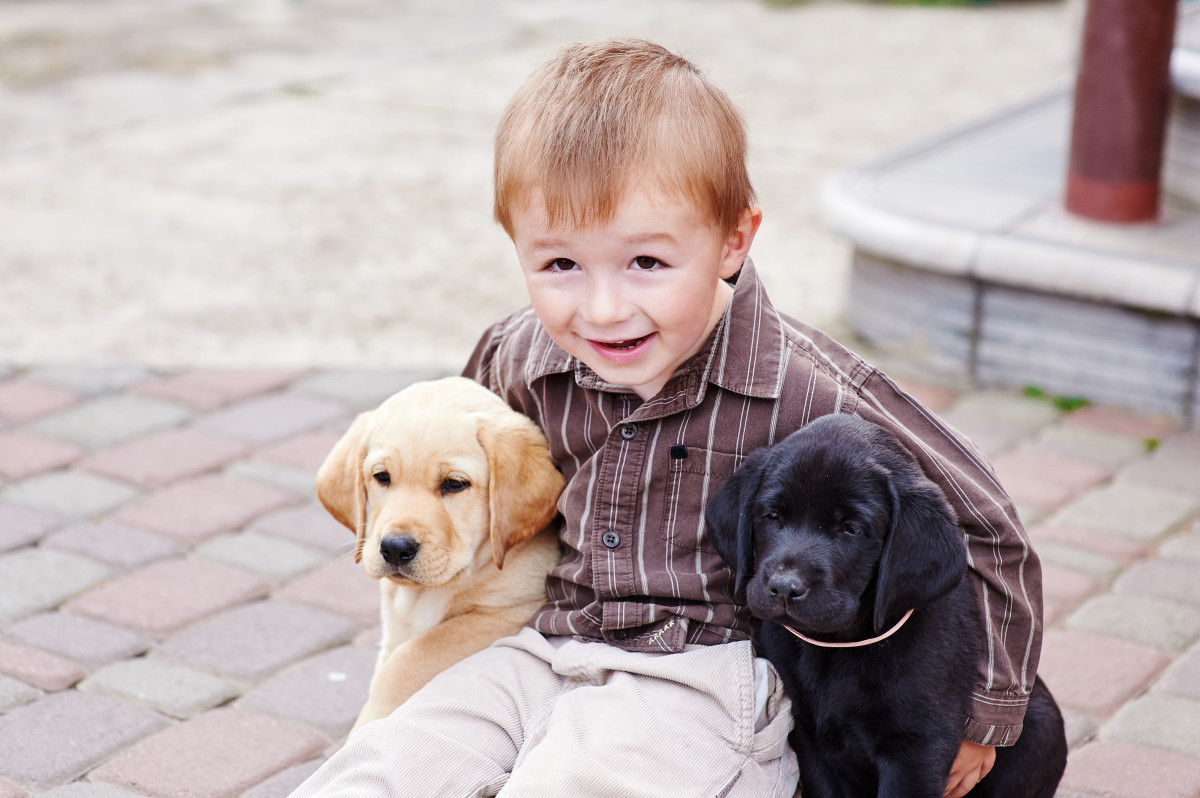 3 Top Best Dog Breeds for Kids and Families