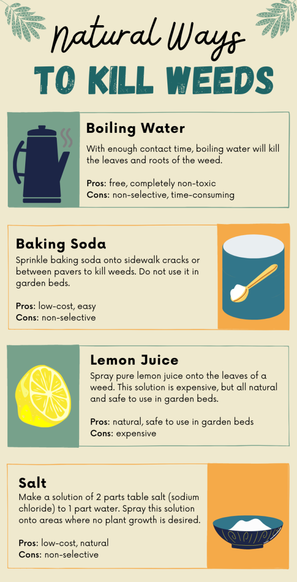 If you don't have castile soap or Epsom salt on hand, these weed-killing methods only require single ingredients that you likely already have in your kitchen.