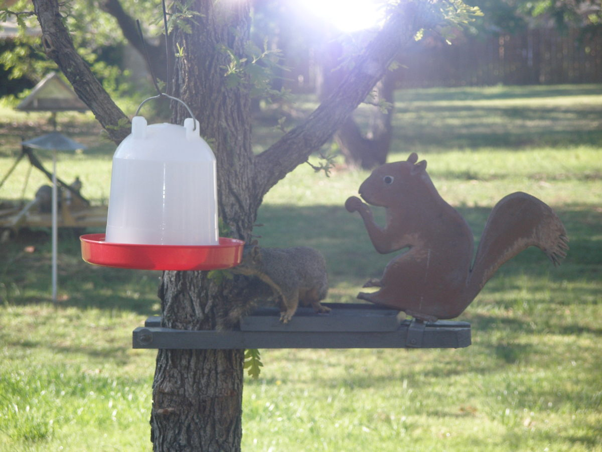 Squirrels - Adventures of Chip, Dale and, Bob (It Is a New Generation)