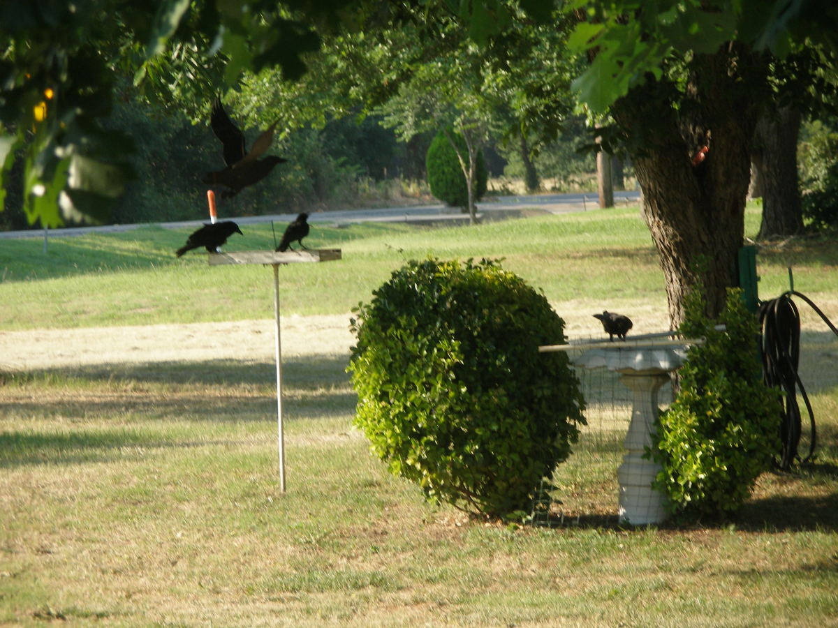 Patty Inglish ask if I have a Crow Convention. Here it is Patty