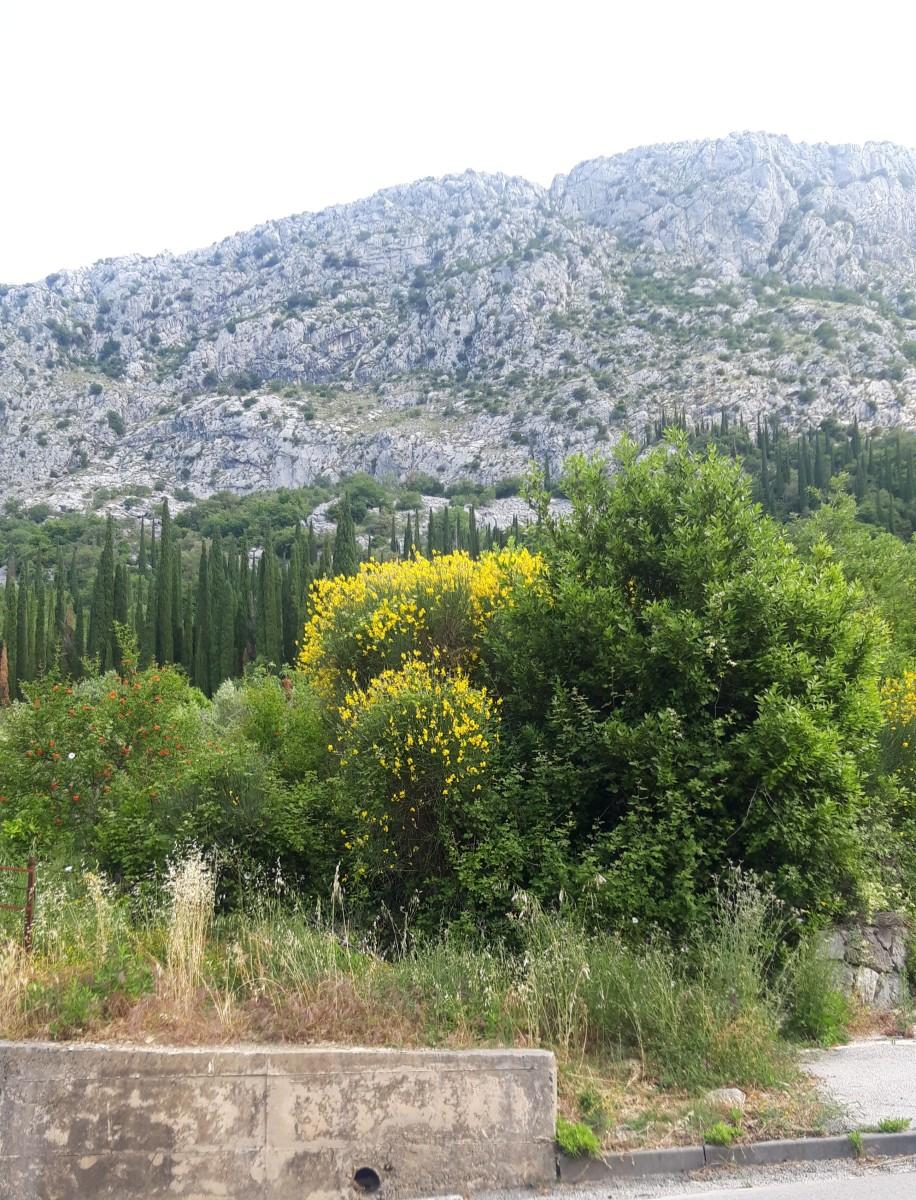 Žuka growing on hills