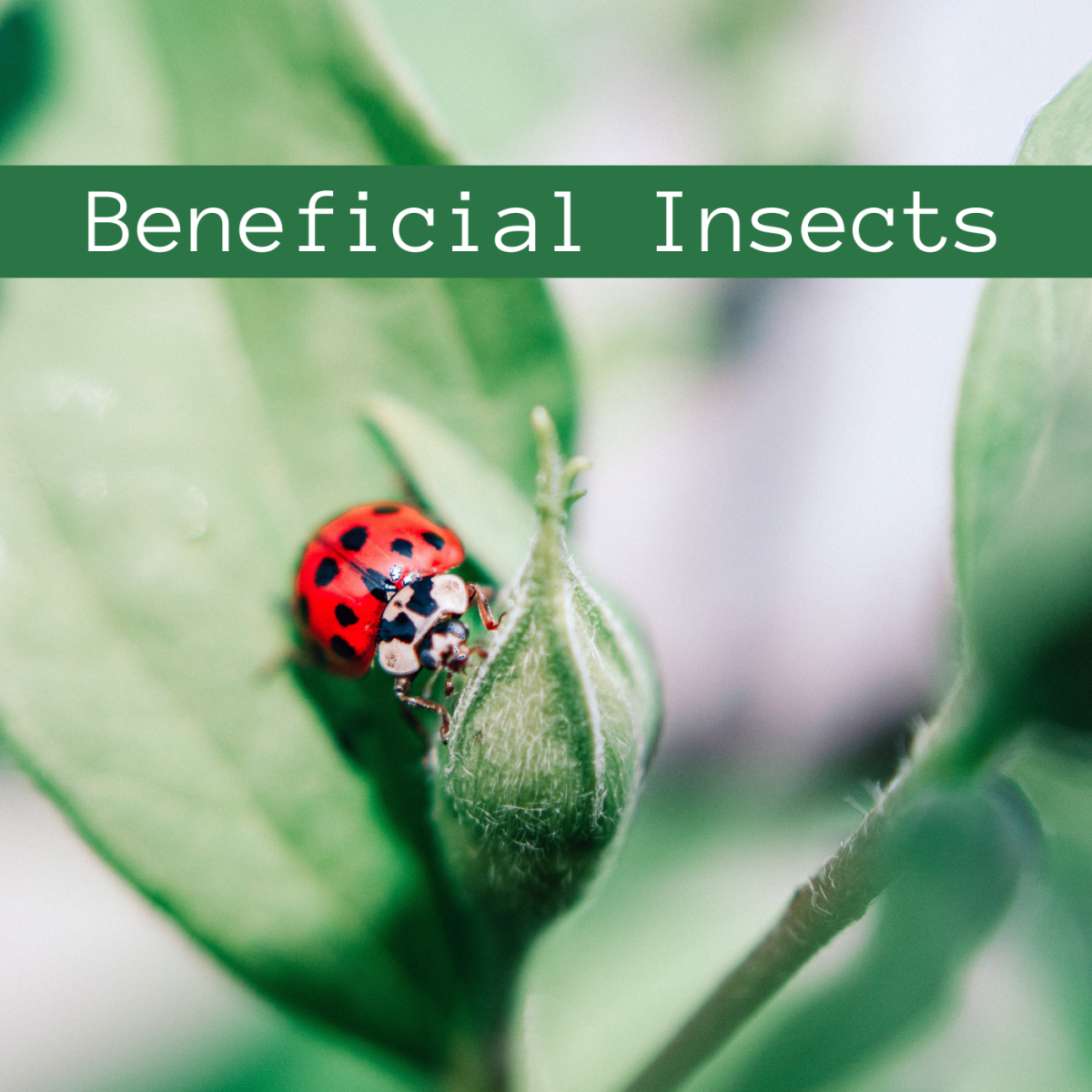 Bugs and spiders that help your garden thrive.