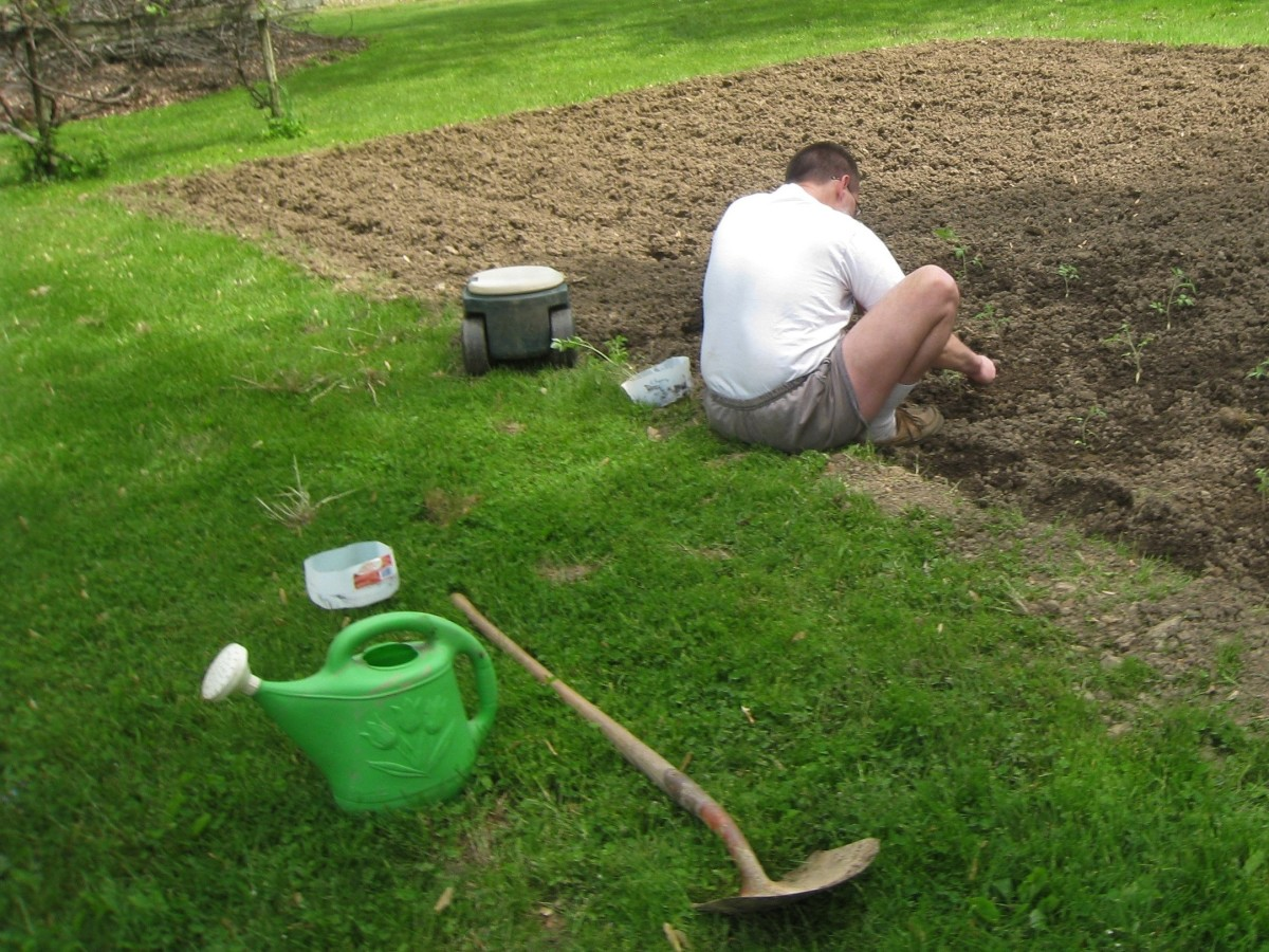 Tilling and weeding