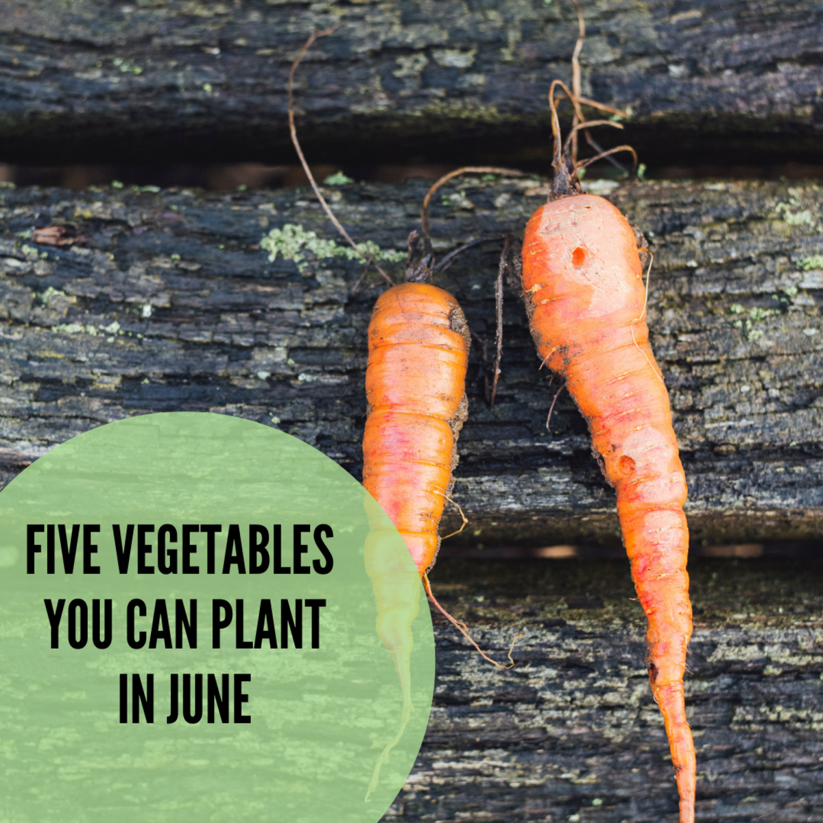 There are a number of vegetables you can plant in early summer.