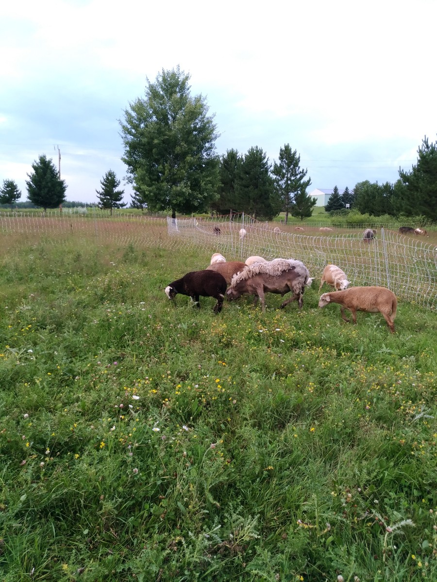 Easily contain and move small groups of animals with portable electric net fences.