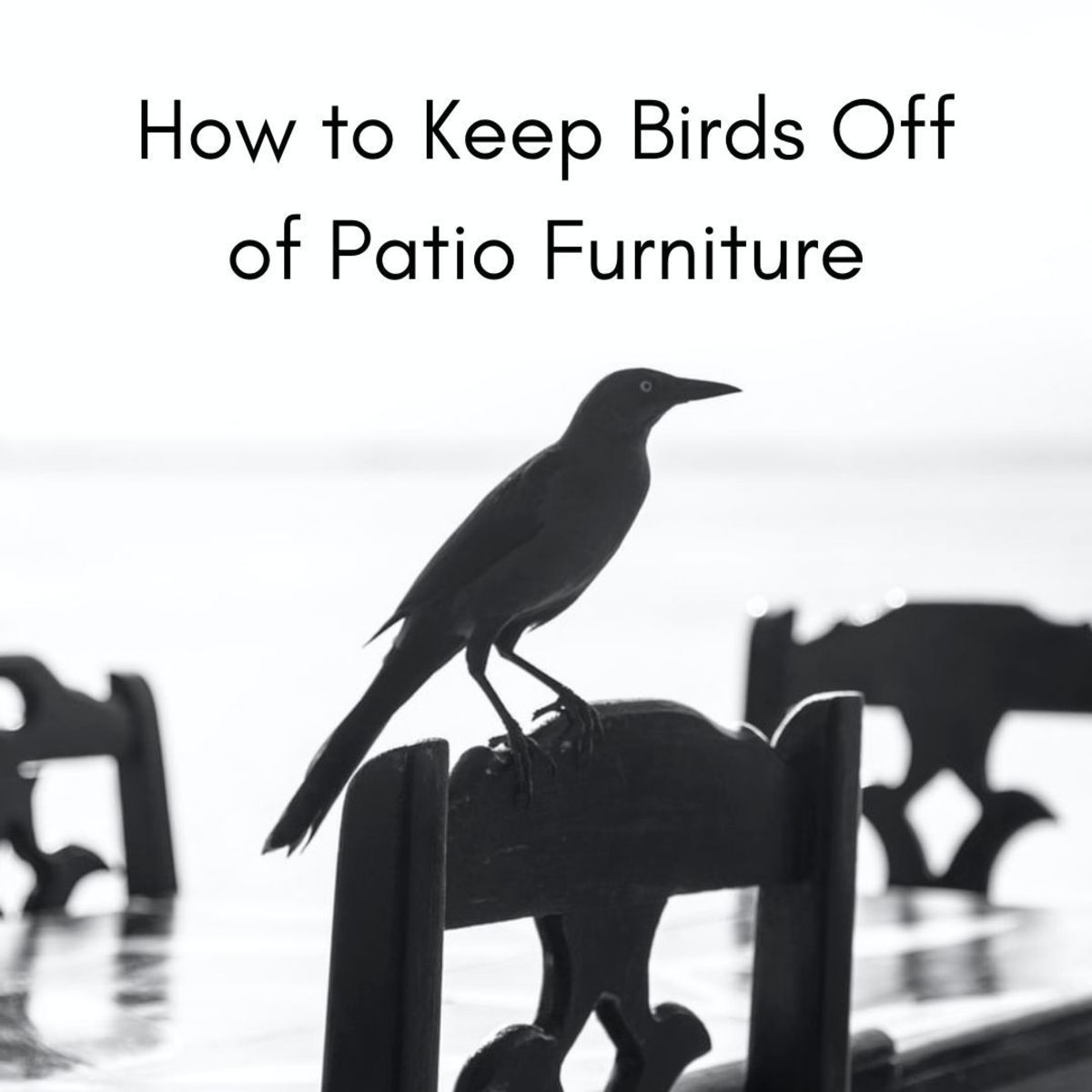 Birds can destroy our furniture and (sometimes) ruin our health.