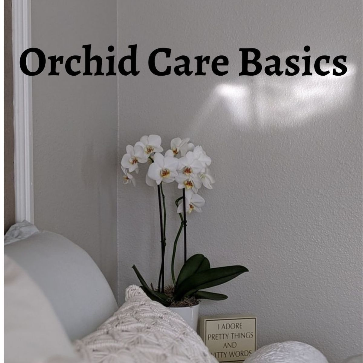 Basics of Orchid Care