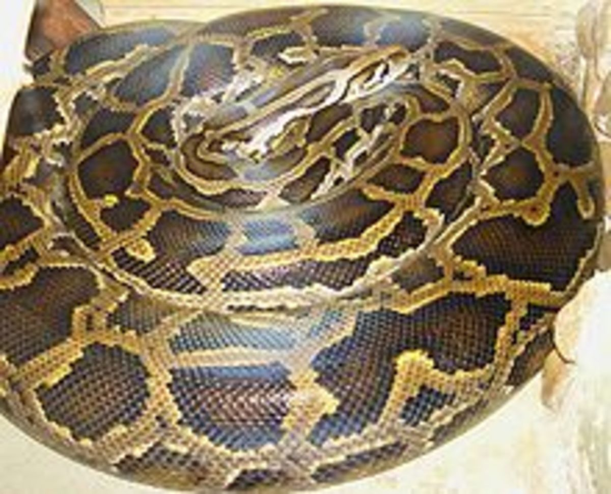 biggest-snakes-in-the-world