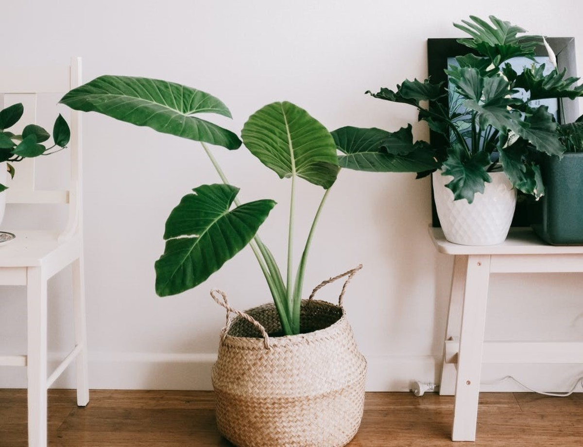 Plants are an excellent choice that can be moved all year round to keep a space fresh.