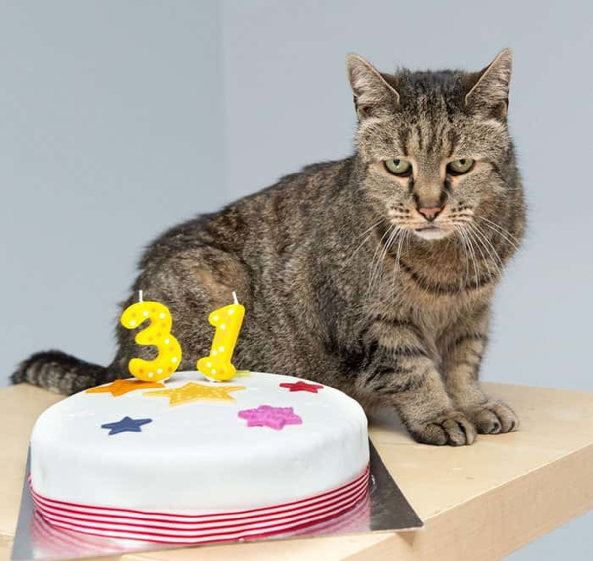 how-long-do-cats-live-and-how-can-they-increase-your-lifespan