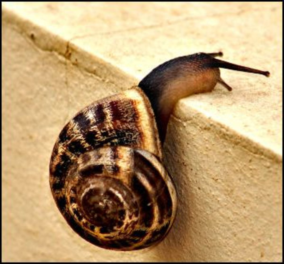 How to Keep Slugs and Snails Away From Your Garden