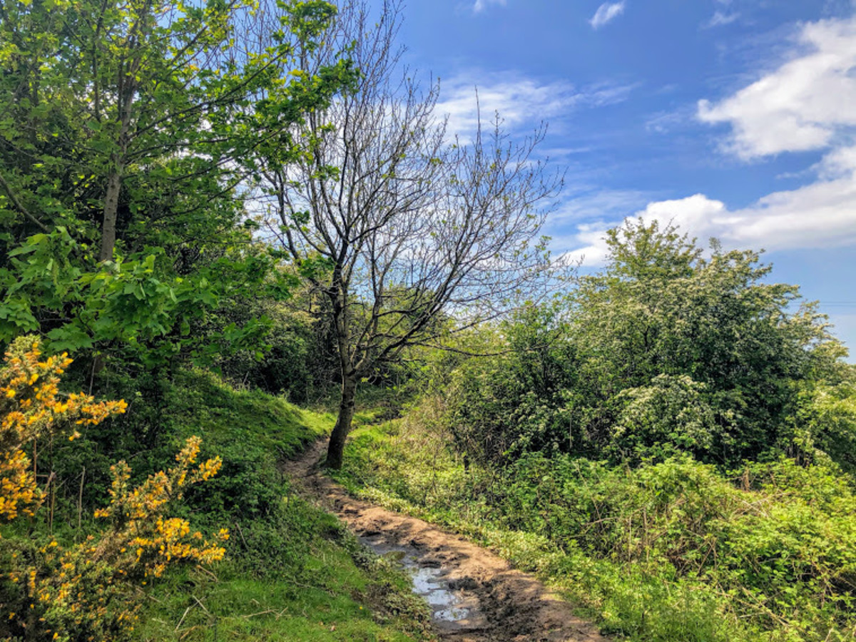 Stunning country paths to be found throughout the walk.