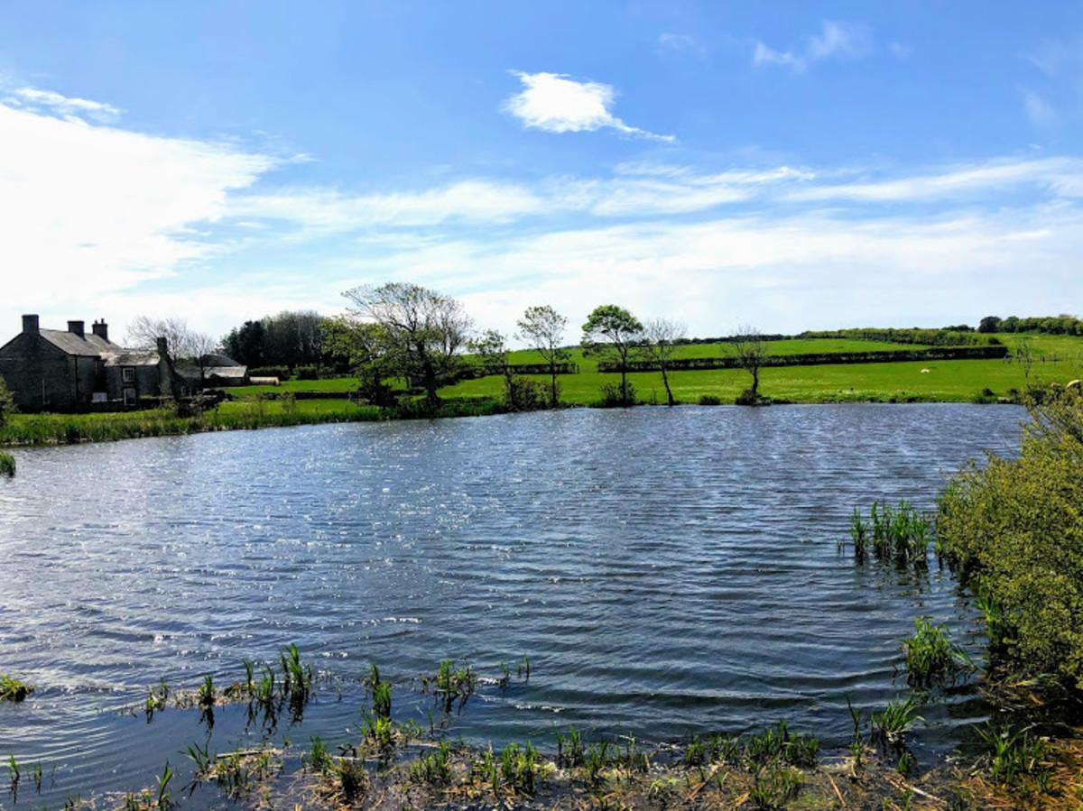 Pond before leaving St Brides Major.